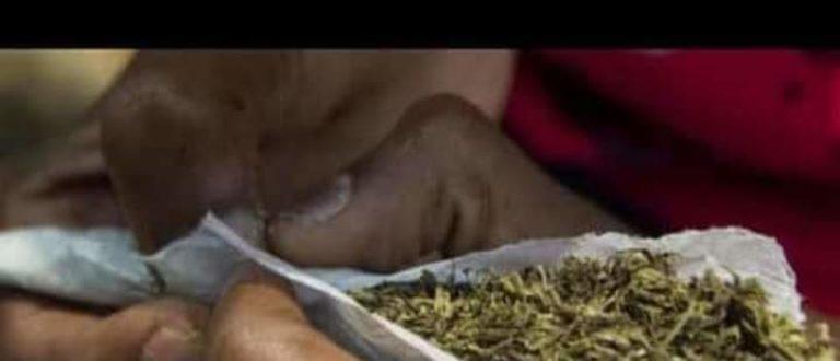 Article : 0️⃣3️⃣ raisons pour lesquelles il ne faut pas fumer la ganja.